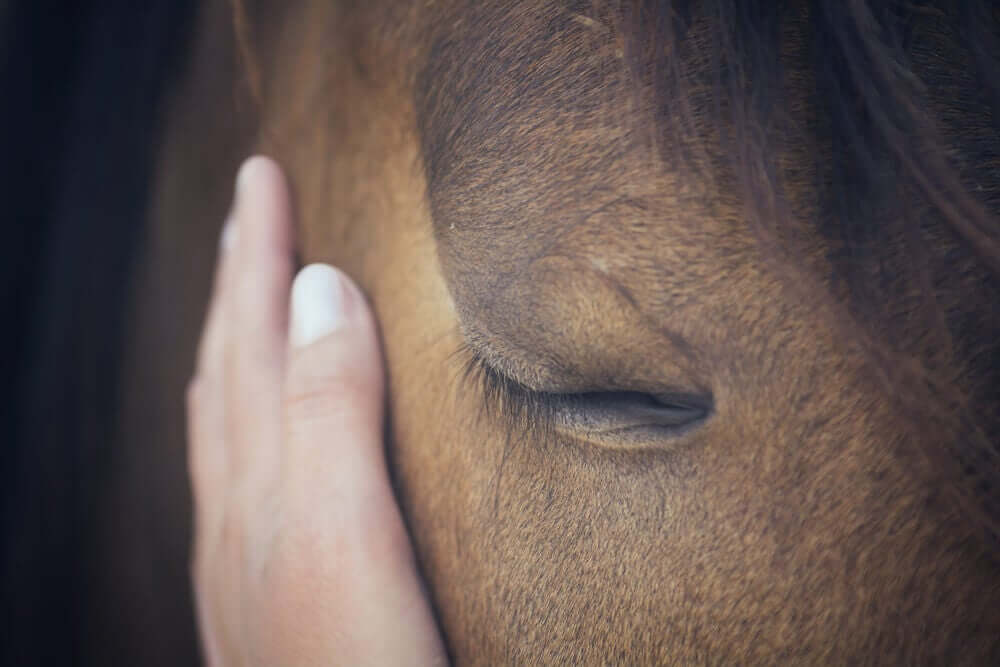 Mão acariciando um cavalo