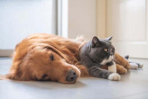 Gato e cachorro dormindo juntos