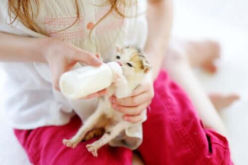 Gato filhote tomando mamadeira