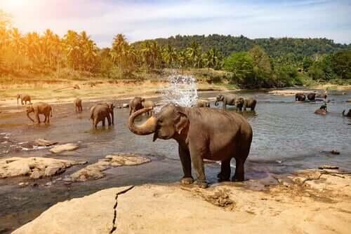 Elefante tomando banho