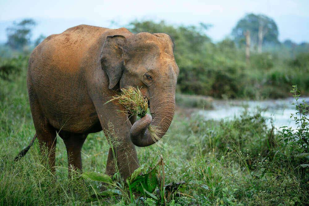 História das civilizações e dos elefantes