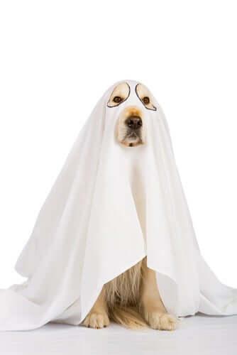 Fantasie o seu animal de estimação para o Halloween