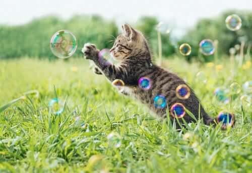 Gato brincando com bolhas de sabão