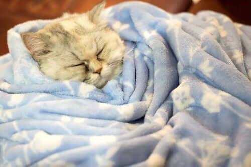 Os gatos hibernam no inverno?