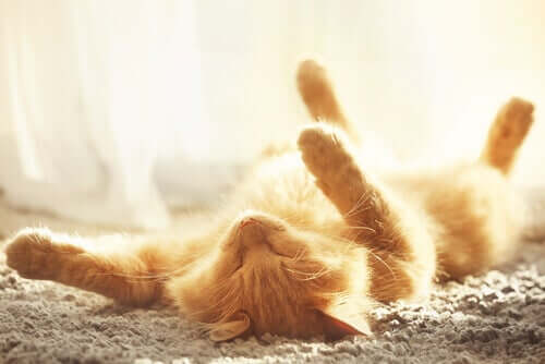 Como refrescar um gato no verão?
