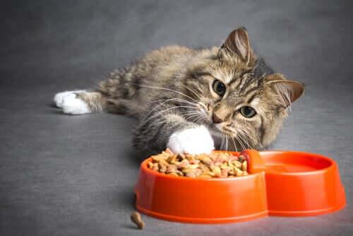 Como alimentar um gato com câncer?