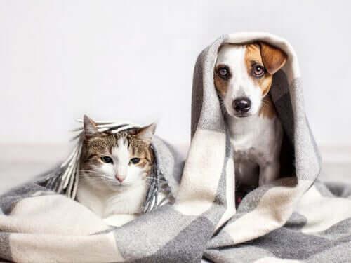 Gatos que pensam como cães