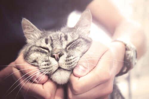 Gato sendo agarrado