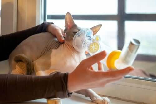 Problemas respiratórios em gatos: causas e sintomas