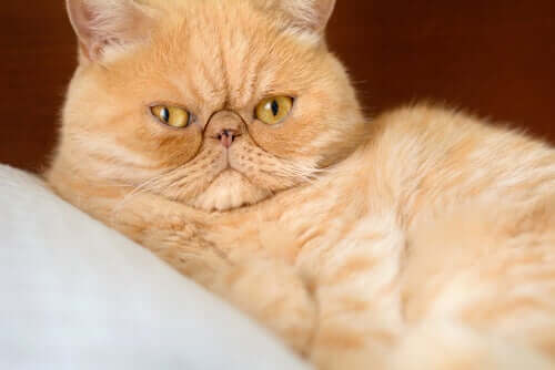 Os gatos vivem mais tempo do que os cães