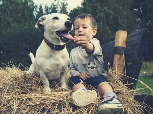 Menino mexendo na língua de cachorro