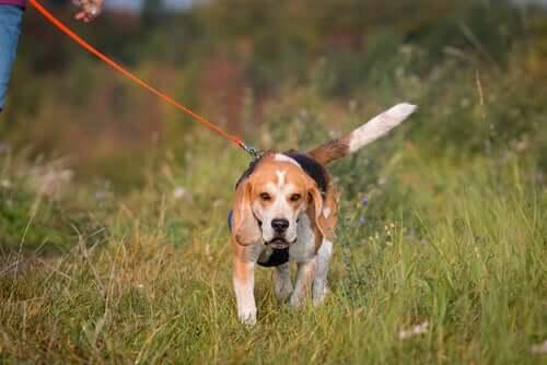 Cachorro passeando na natureza