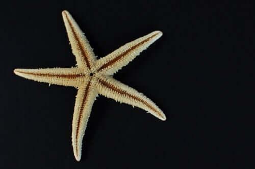 O que é uma estrela-do-mar?