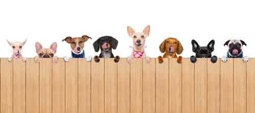 Como escolher cercas e barreiras para cães na sua casa