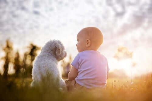 Cachorro sentado com bebê