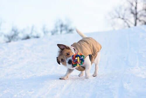 Coisas engraçadas que os cães fazem
