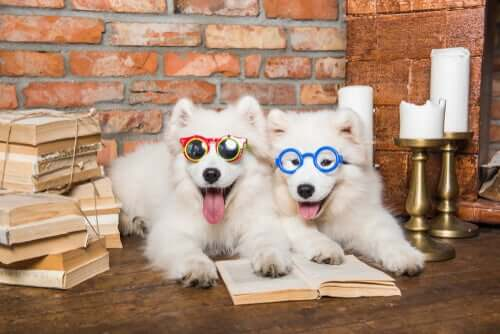 Cachorros usando óculos