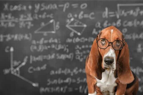 É possível estimular a inteligência dos cães?