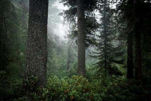 Floresta de taiga