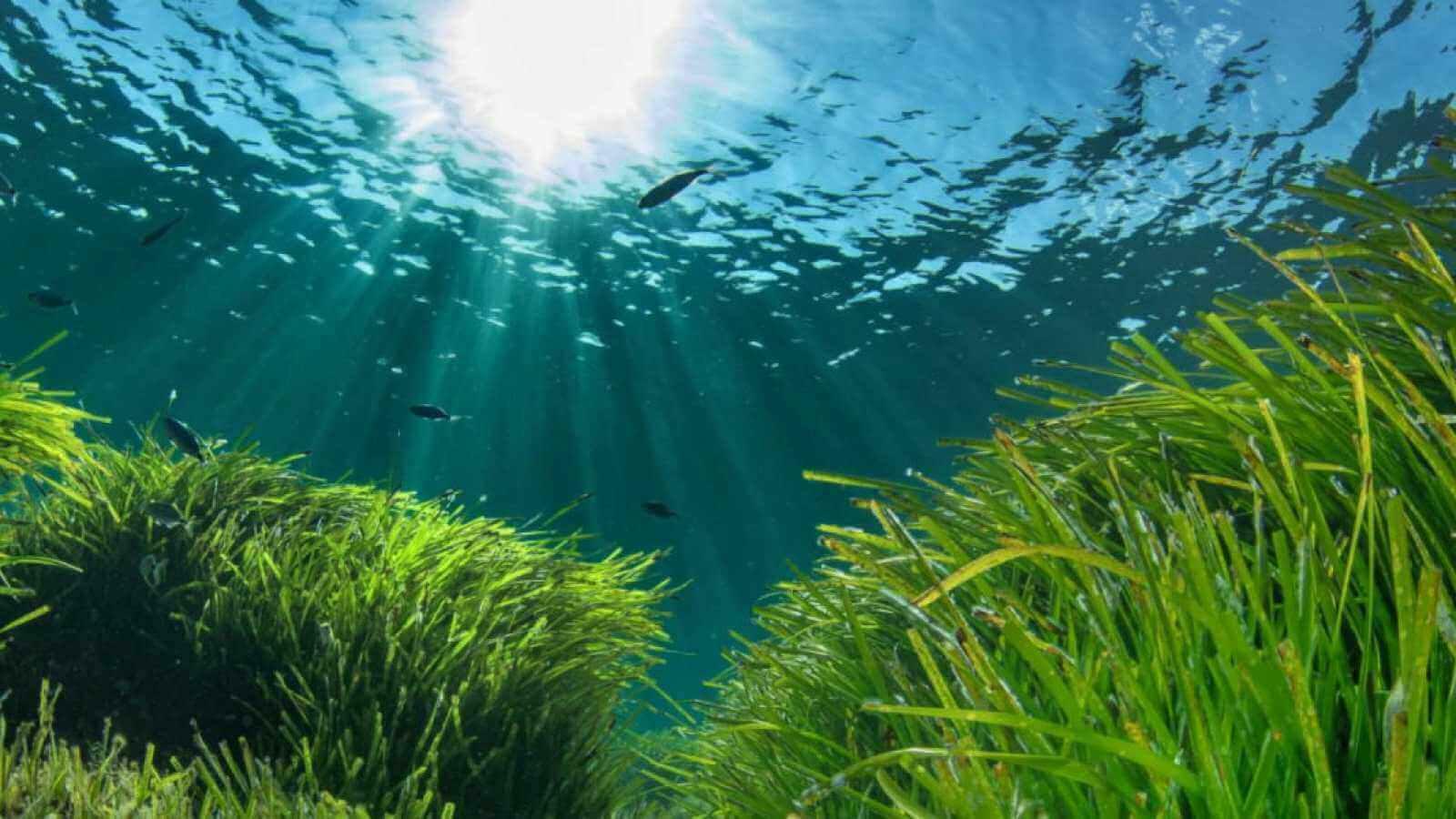 Como funcionam as reservas marinhas?