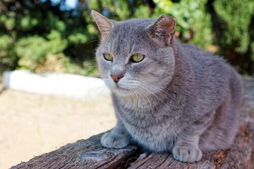 Possíveis causas dos maus comportamentos do gato