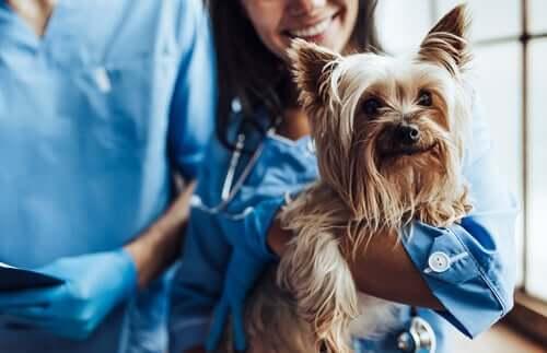 O que causa o hipotireoidismo em cães?