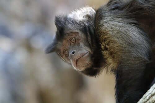 Um centro de resgate de animais está em perigo na Bolívia