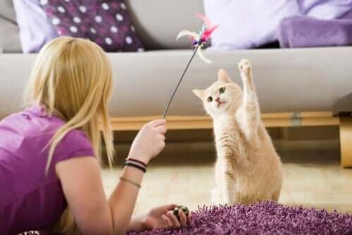 Como entreter os animais de estimação durante a quarentena?