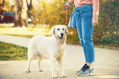 Passear com os animais de estimação durante a quarentena