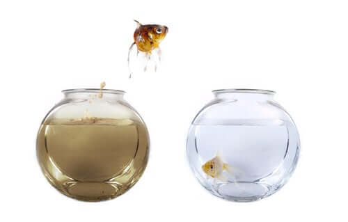 Como regular a ciclagem do aquário?