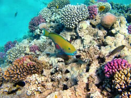 Reservas marinhas das Ilhas Columbretes