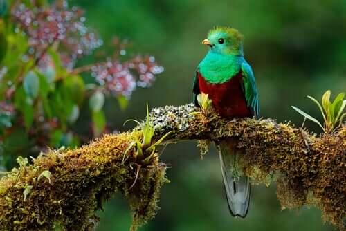 O lendário quetzal da Mesoamérica