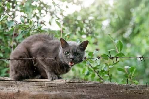 3 sinais que indicam que seu gato tem raiva felina