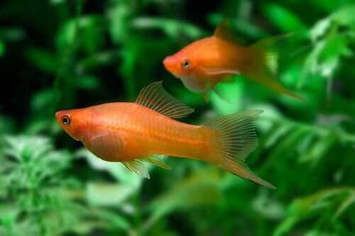 O aquário ideal para o seu peixe