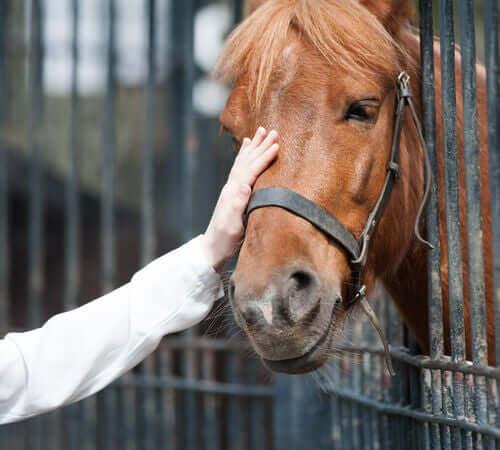 Adotar um cavalo: o que você precisa saber