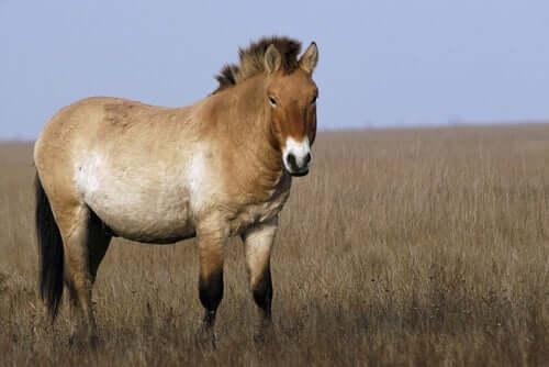 Ainda existem cavalos selvagens?