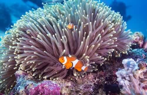 curiosidades sobre os peixes coloridos