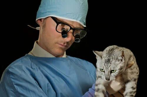 Alguns gatos são mais propensos à asma?