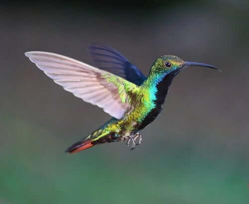 Os diferentes tipos de bico das aves: alongado