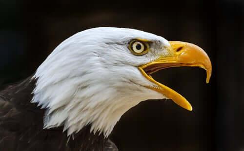 Os diferentes tipos de bico das aves: gancho
