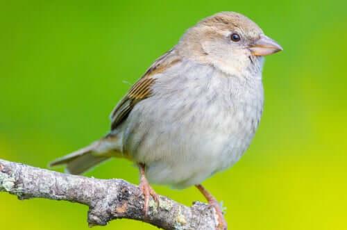 Os diferentes tipos de bico das aves: triangular