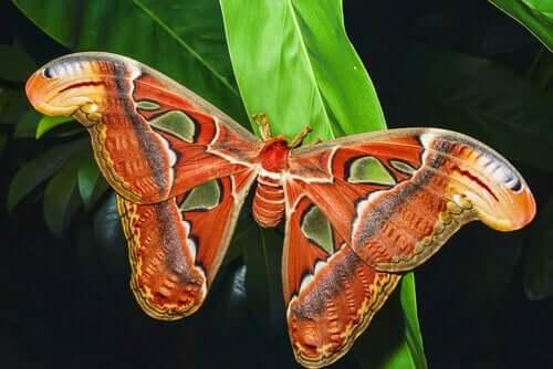 O museu entomológico CURLA