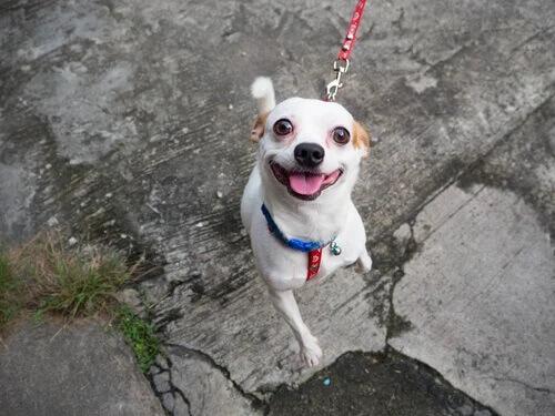 Cachorro feliz por estar passeando