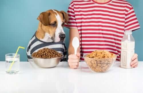 as necessidades nutricionais dos cães