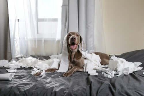 Animais de estimação hiperativos: dicas para lidar com a quarentena
