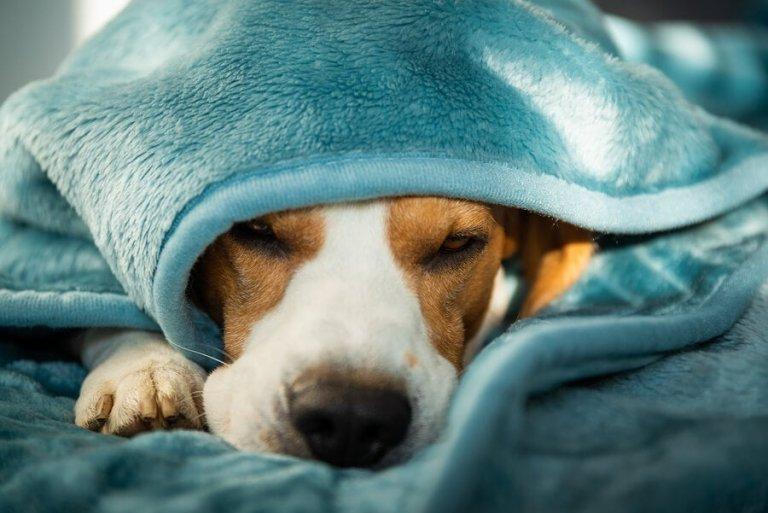 Saúde mental e doença em cães: como tratar?