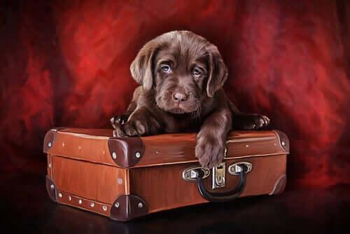 Conheça o primeiro museu do cachorro do mundo
