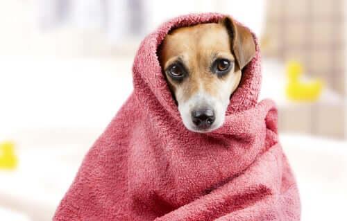 Como dar banho no animal de estimação?