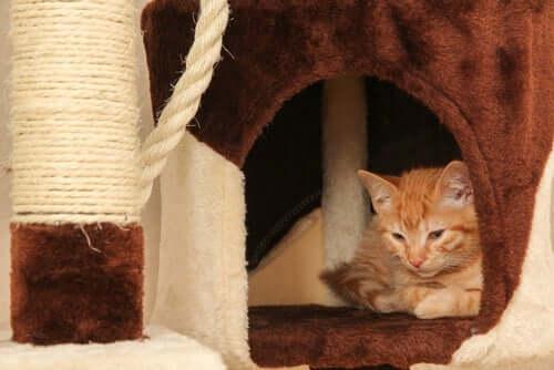 Casa de gato caseira.