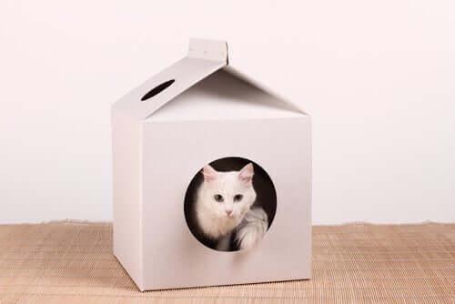 Casa de papelão para gatos.